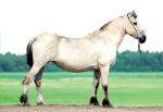 Лошади упряжные