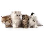 Прочее: Кошки