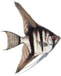 Цихловые рыбы