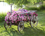 Цветы и цветоводство