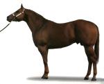 Лошади тяжелоупряжные тяжеловозные
