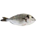 Рыба речная другая