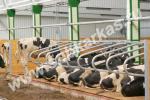 Животноводческое оборудование
