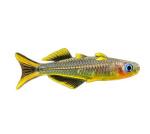 Меланотениевые рыбы