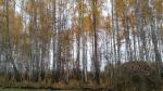 Балансы разных пород дерева