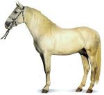 Лошади верховые