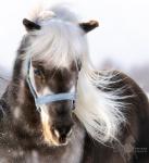 Пони и миниатюрные лошади