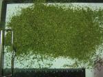 Пряные растения и травы молотые