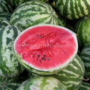 Професианальные семена покупка ростовская обл