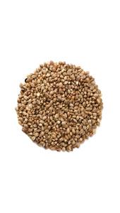 Семена конопли купить в волгограде марихуана купить в кирове